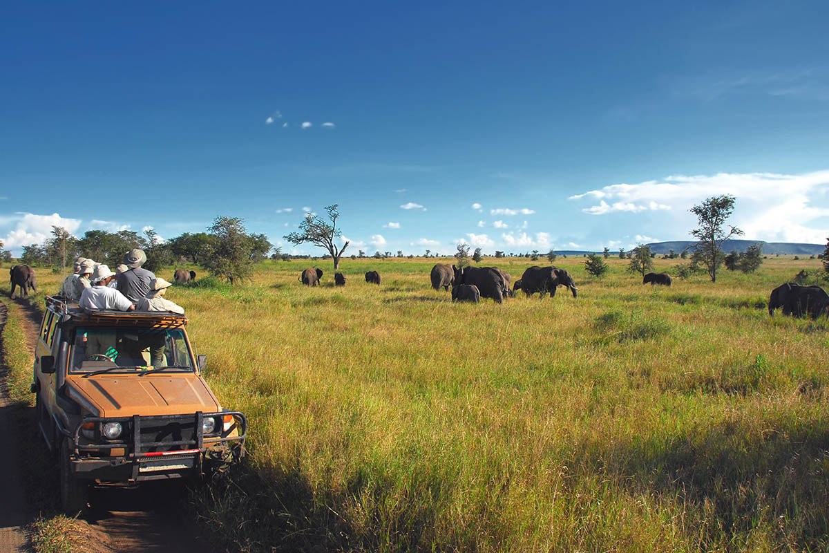 4x4 African bush game drive