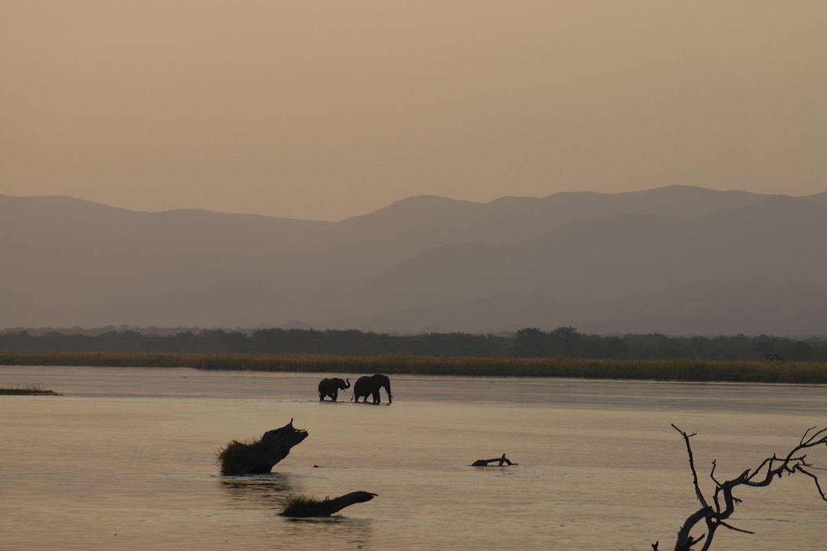 Elephants at sunset in Zimbabwe
