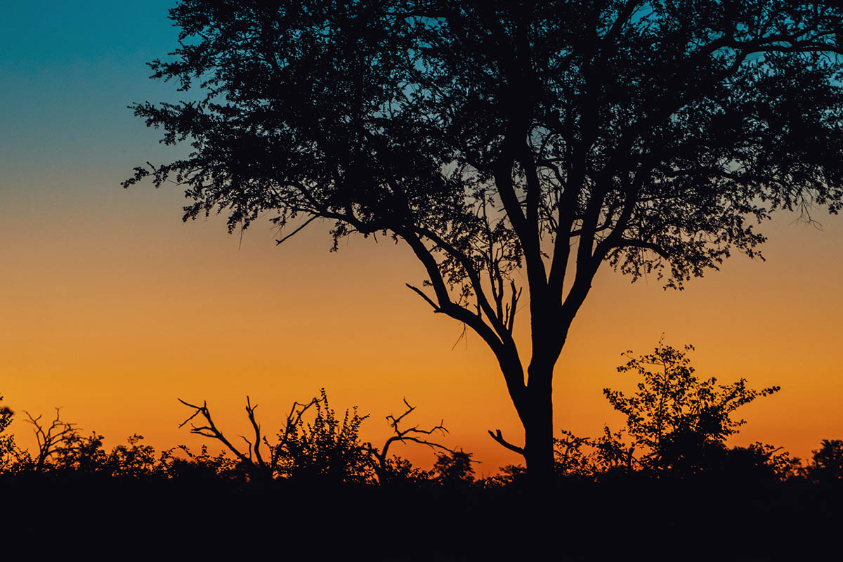 A journey through the Okavango Delta Capturing a Mobile Safari Expedition with cazenove+loyd