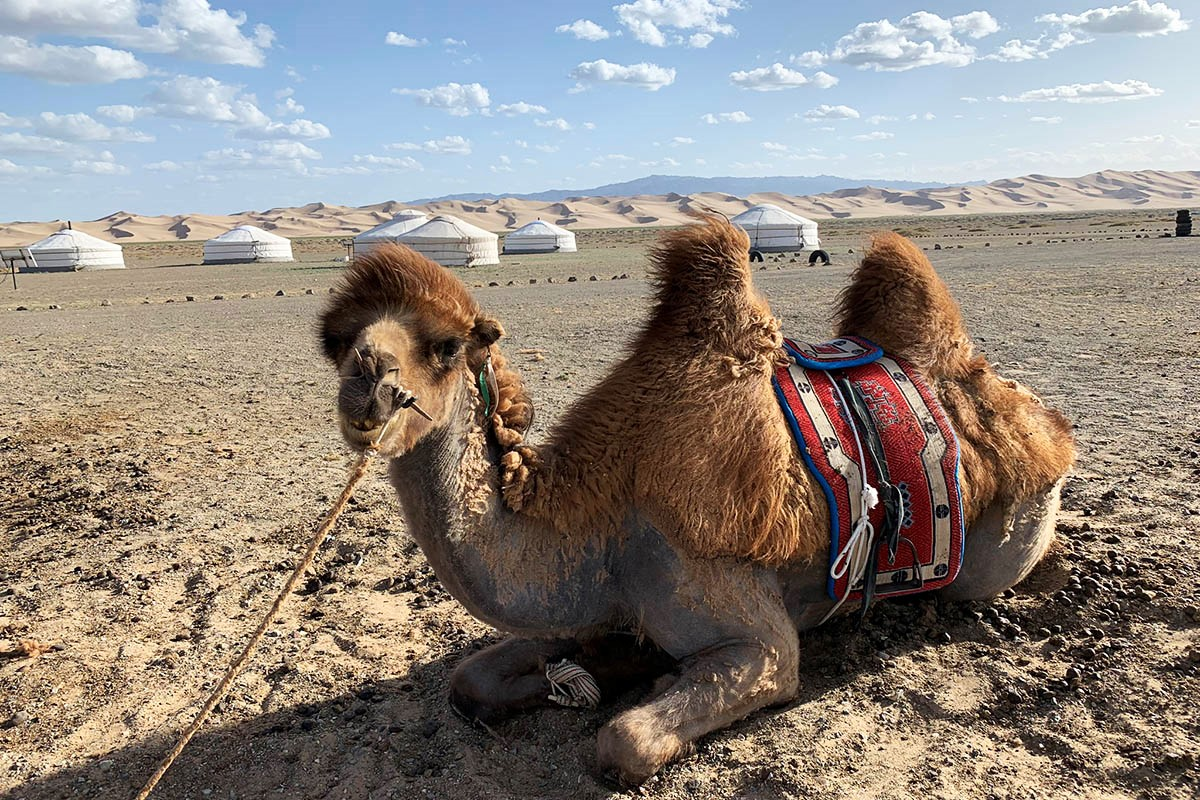 Three of the best experiences in the South Gobi Desert Mongolia
