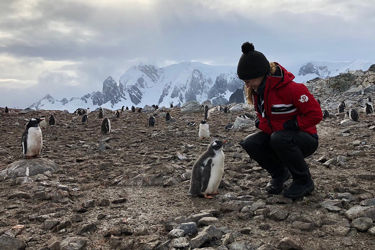 Walking among emperor penguins in Antarctica