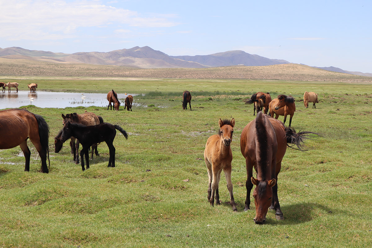 A guide to horse-riding in Mongolia