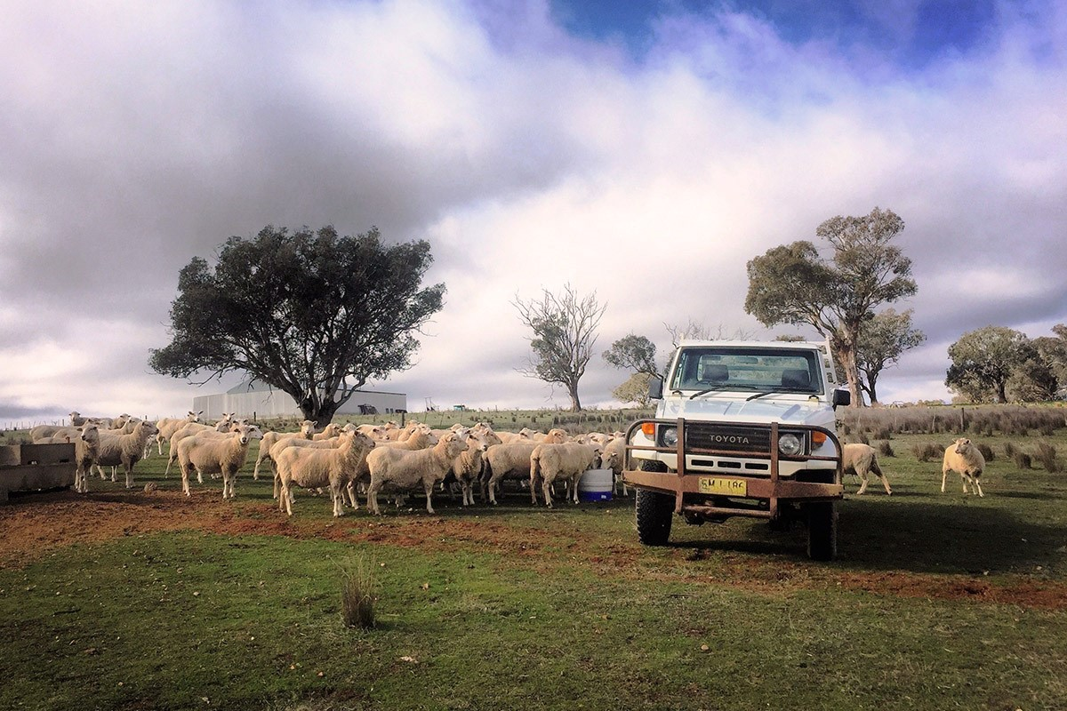 Experiencing farm life in the Australian outback