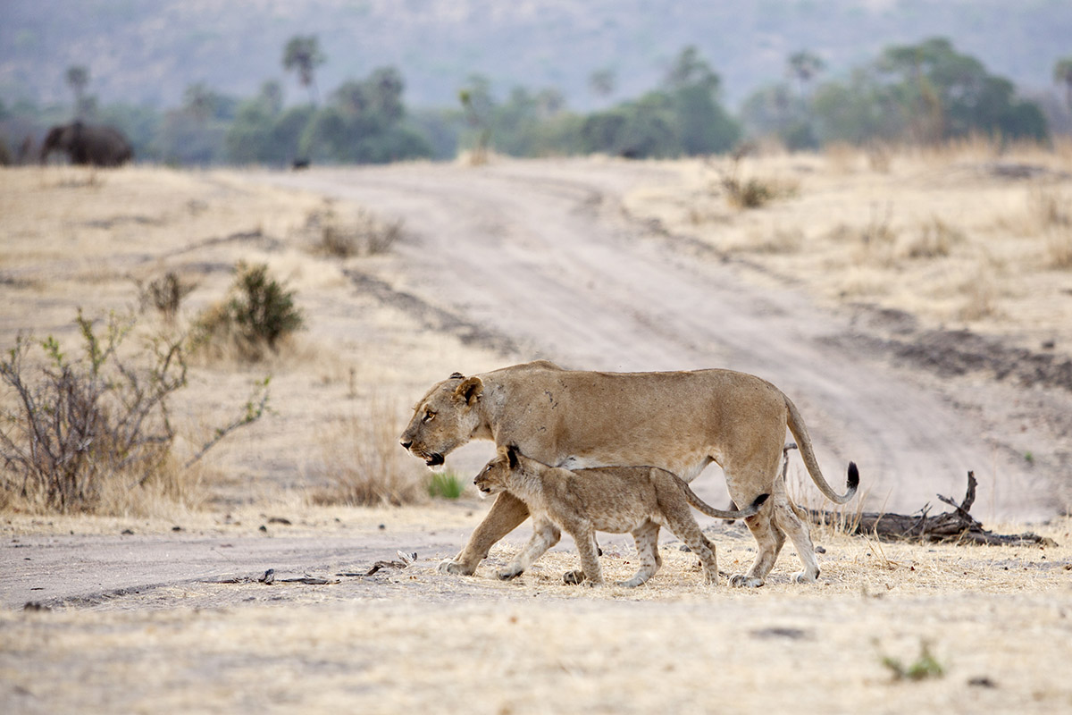What is the allure of Ruaha National Park?