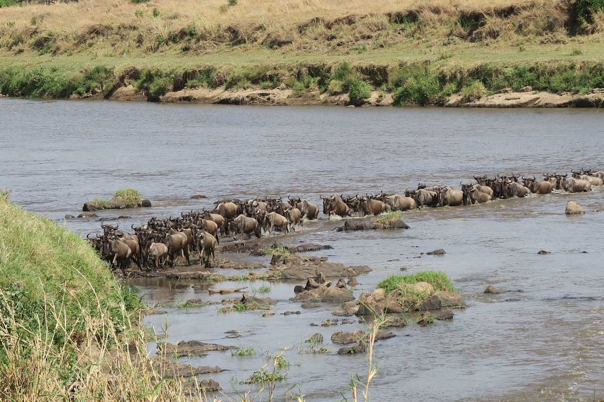 A day in the northern Serengeti