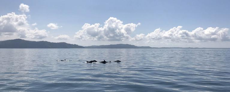 Dolphin Spotting in the Golfo Dulce