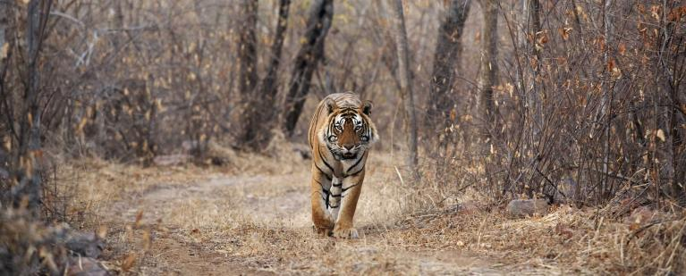 Our experience at Sher Bagh, Ranthambore