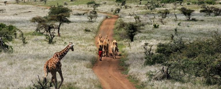 Why I loved Kenya's Laikipia Plateau